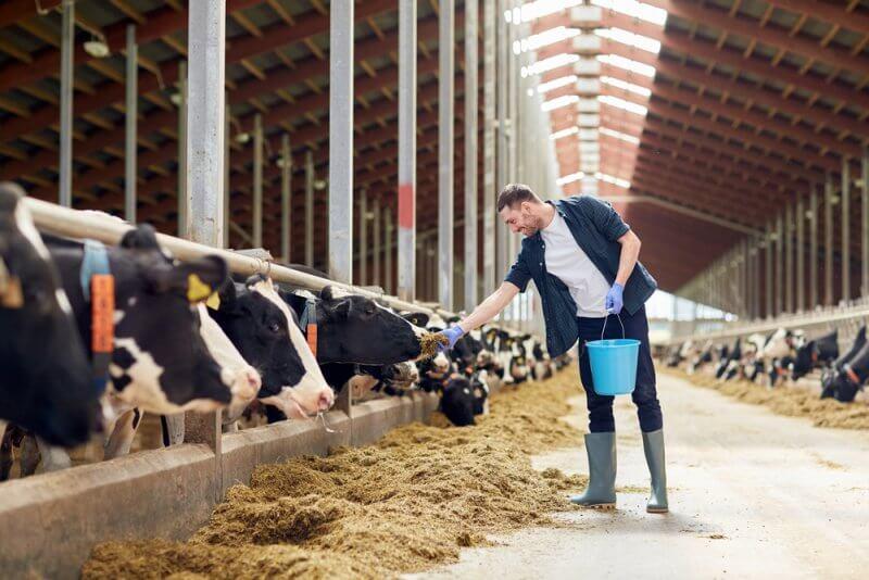 家畜伝染病予防法